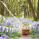 Photo of bunting in beautiful Bluebell woods in Dorset, England, UK